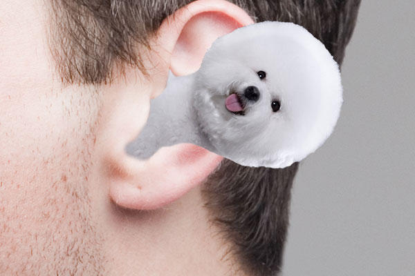 fluffy white hairs sticking out of ear