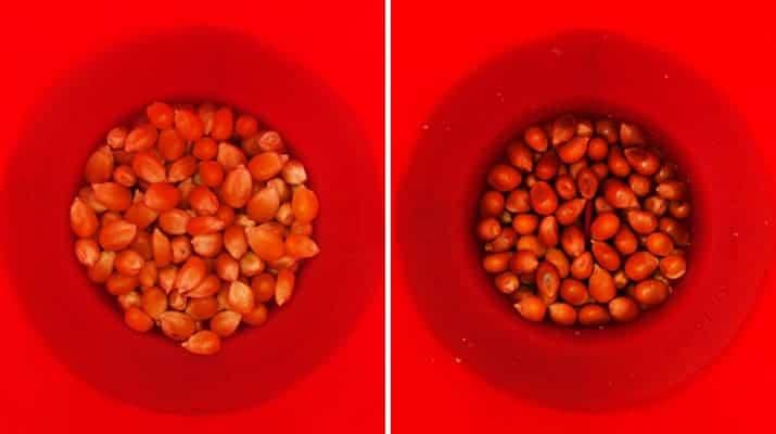 Joi MSC Bola popcorn microwave popcorn popper popped kernels vs unpopped kernels comparison